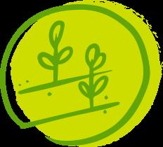 Biochar en Agricultura y Descontaminación de suelos
