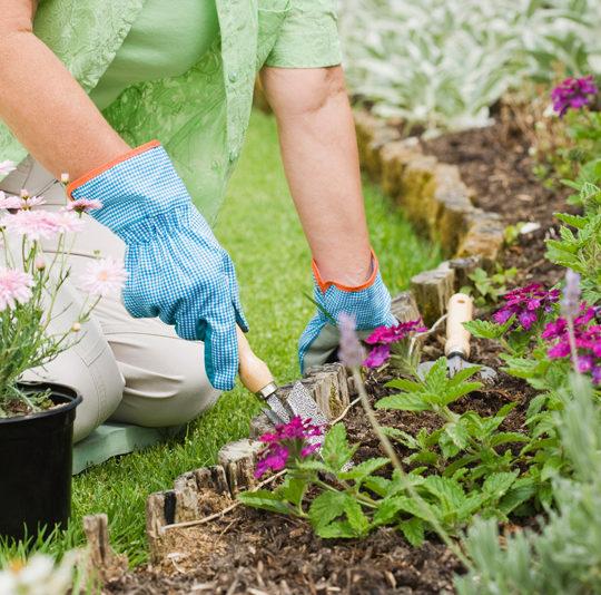 Livingchart, producto Biochar para huerto y jardín