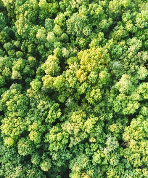 Biochar para Reforestación