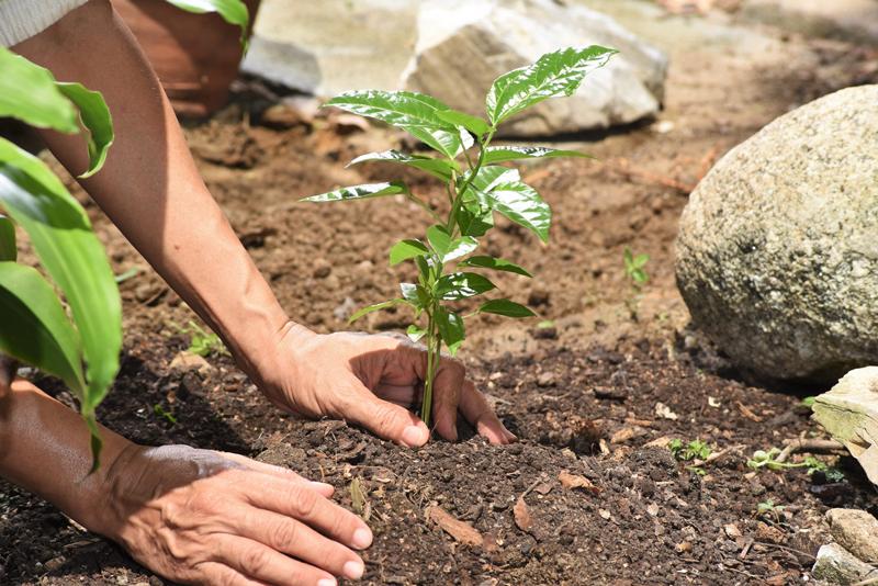 3.plantando