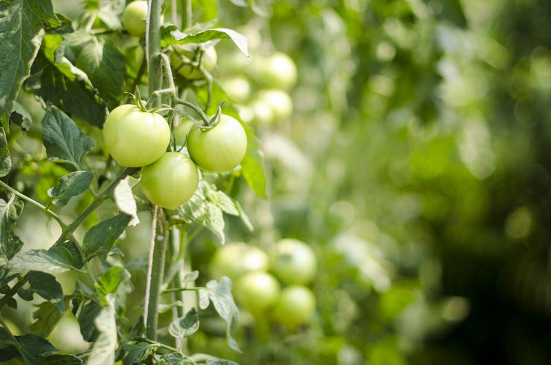 Biochar para agricultura