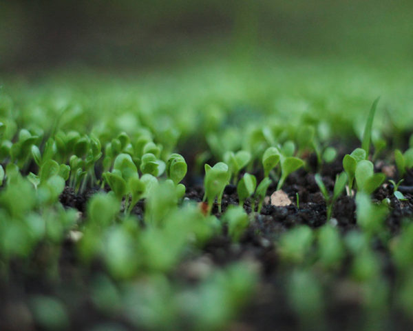 Biochar carbon vegetal