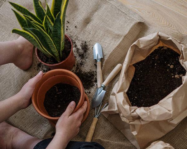Biochar jardineria y horticultura